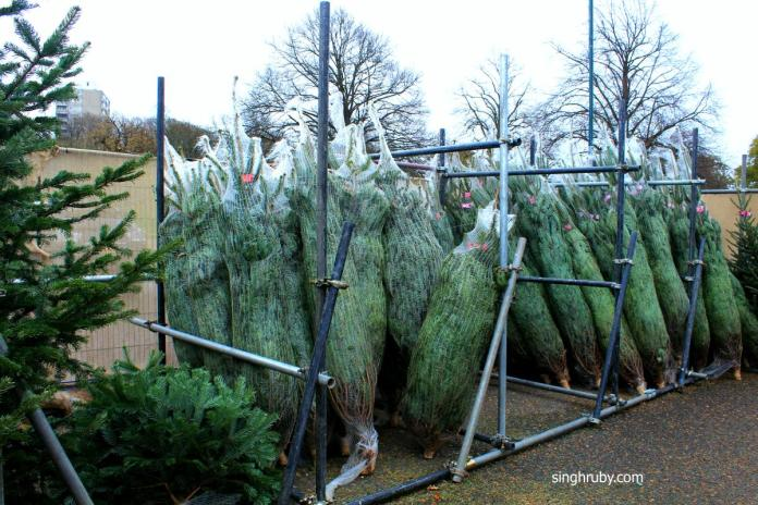 Christmas Trees packed in net in advance. For the customer who are always in hurry.