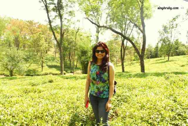 Soaking in the beauty of tea gardens