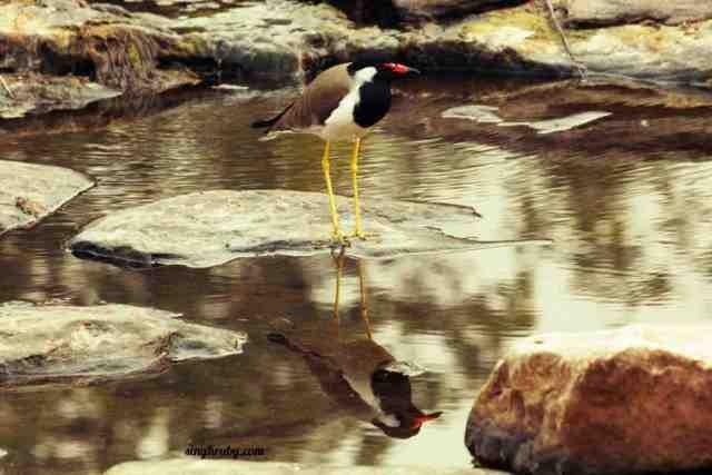 bird-at-panna-national-park
