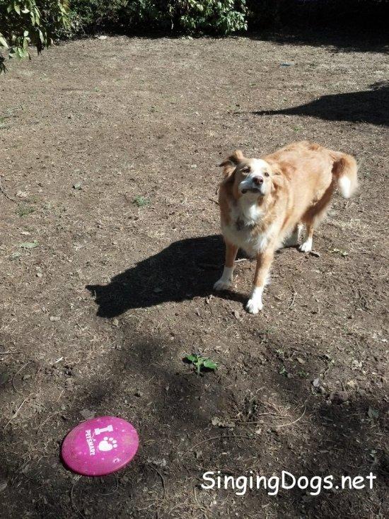 cody frisbee