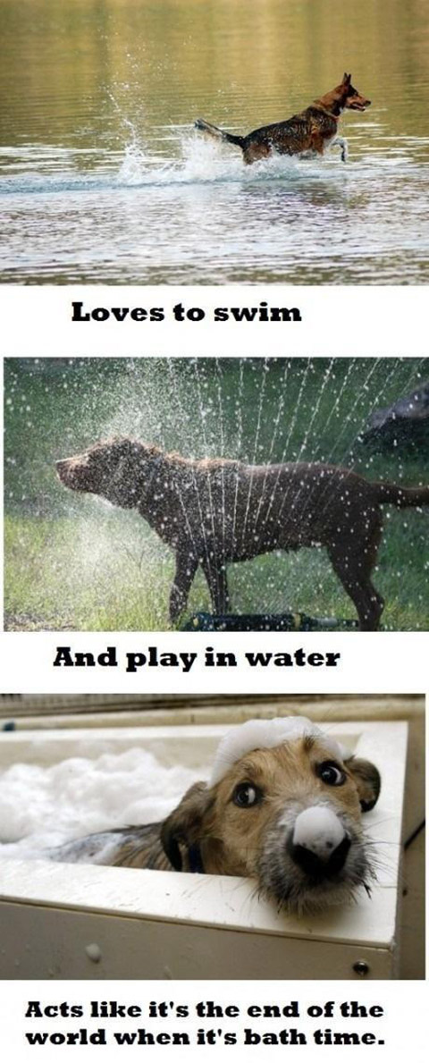 dogs hate baths does your dog hate baths? [meme] singing dogs