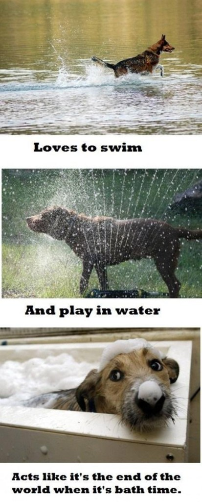 dogs hate baths