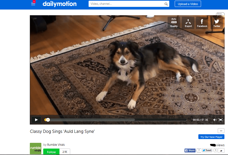 Dog News Archives Singing Dogs