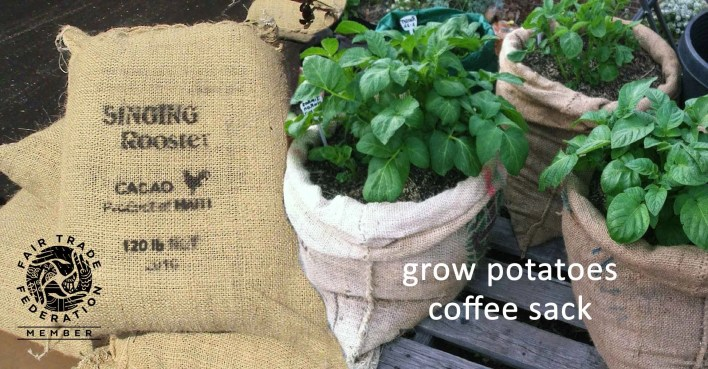 grow-potatoes-coffee-sack