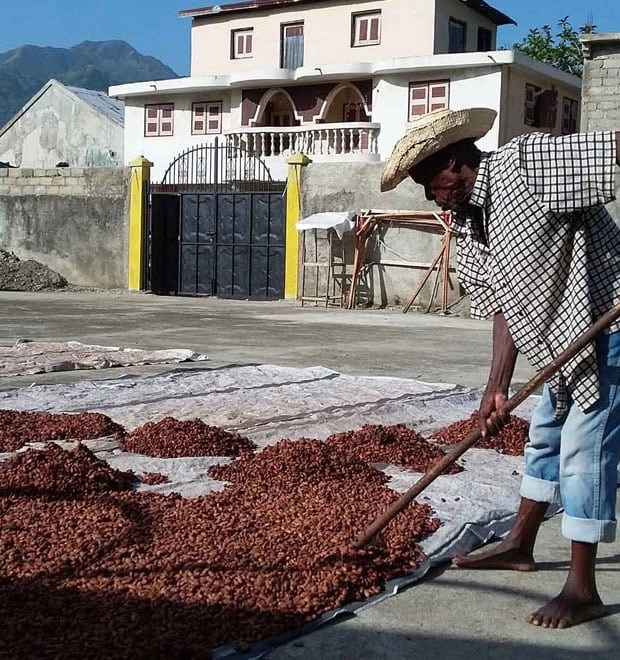 haiti cacao farming organic