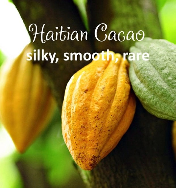 Buy a sample of Haitian cacao