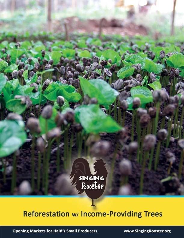 poster haiti coffee seedlings