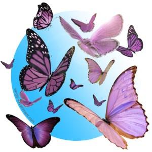 papillons illusion