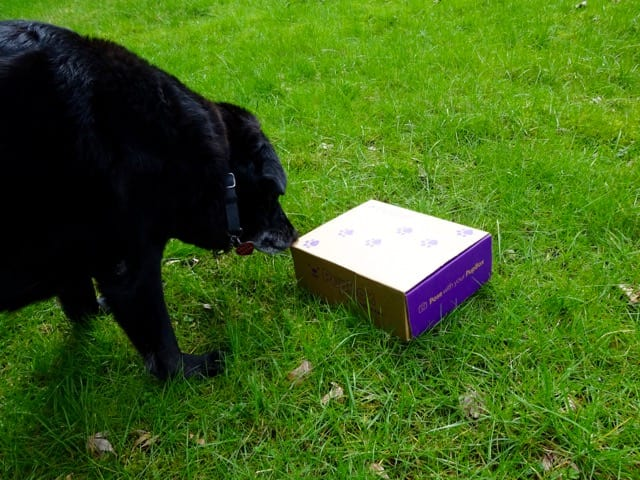 PupBox Review