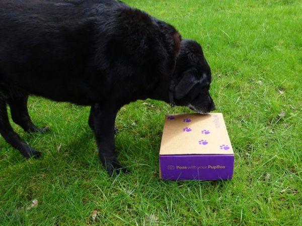 Dog opens a PupBox