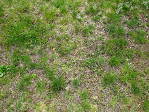 Need lawn alternative