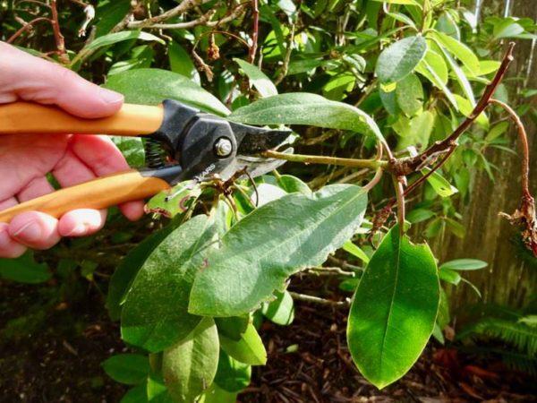 Spring DIY Home Care Pruning