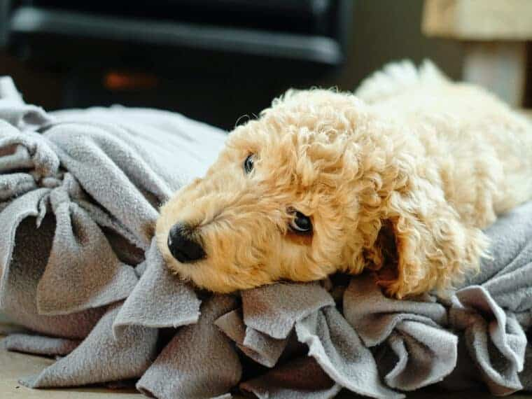 cute puppy laying on fleece dog bed