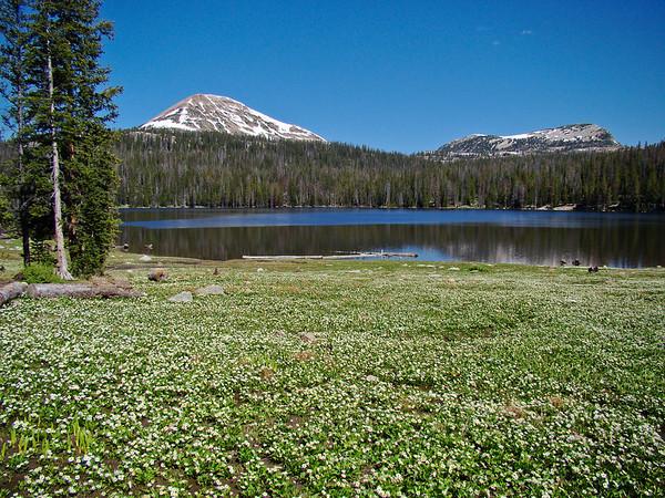 Trial Lake, Utah with Marsh Marigolds