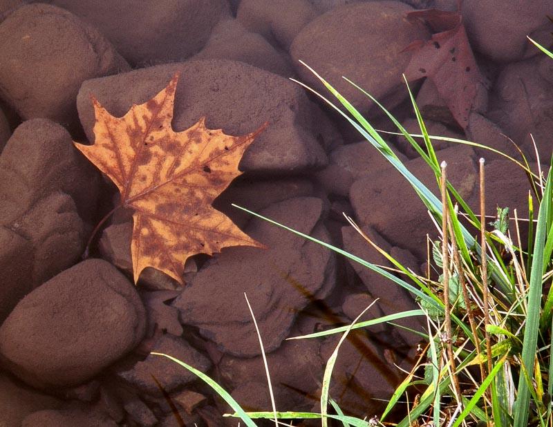 Leaf Underwater and Grass
