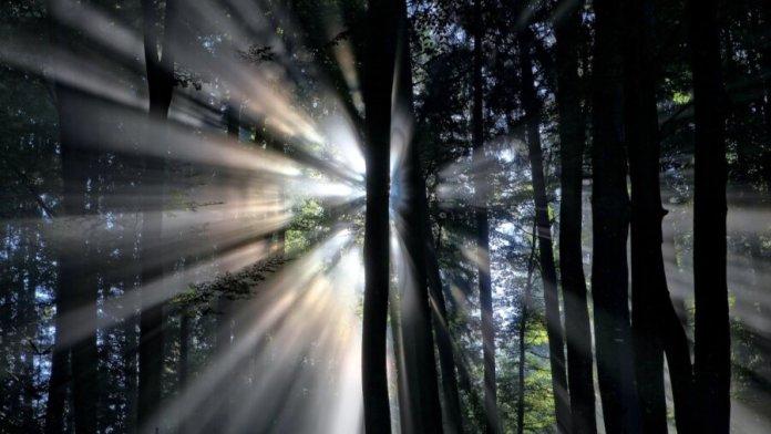 tech stories dark trees forest light rays sun