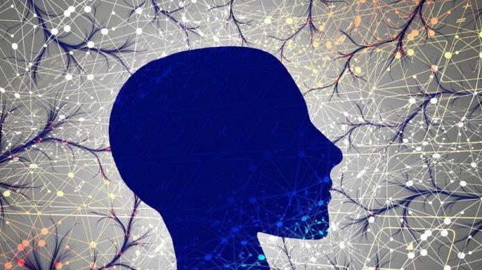 consciousness human brain neurons