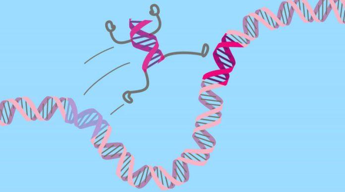 Sıçrayan Genler: Evrimsel Yolculuğumuzdaki Kilit Oyuncular - Sinirbilim