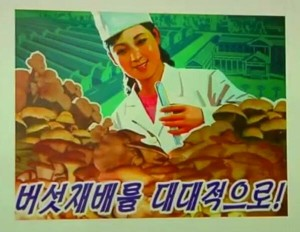 North Korean Mushroom Prowess, Exhibited at a Pyongyang Exhibition of New Year Posters for 2014. Image KCTV, via Adam Cathcart