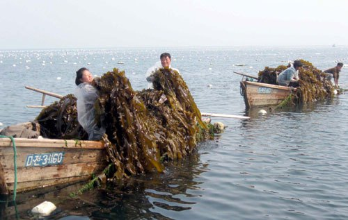 North Korean aquaculture in the present era | Image from Rodong Sinmun, via NK Food Blog