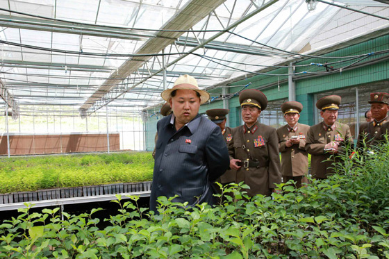 Kim Jong Un and the Tree Nursery