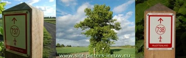 De Witse boom in Vlezenbeek ligt op het wandelnetwerk Pajottenland tussen knooppunten 737 en 738.