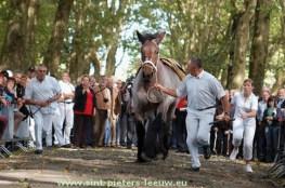 archief-Belgisch-trekpaard_02