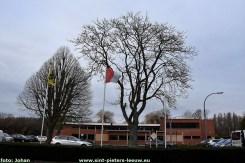 2020-12-26-wensbomen_SPL (6)