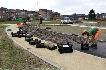 2021-02-25-aanplantingen-belevingstuin-achter-Zilverlinde (1)