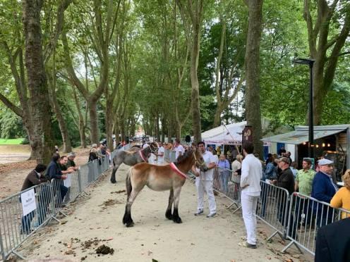 2021-09-26-trekpaarden_Coloma_01