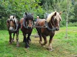 2021-09-26-trekpaarden_Coloma_02