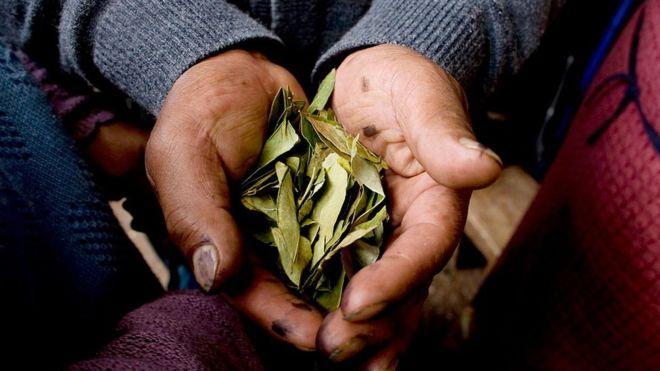 INEI encuestará a peruanos para determinar consumo tradicional de hoja de coca