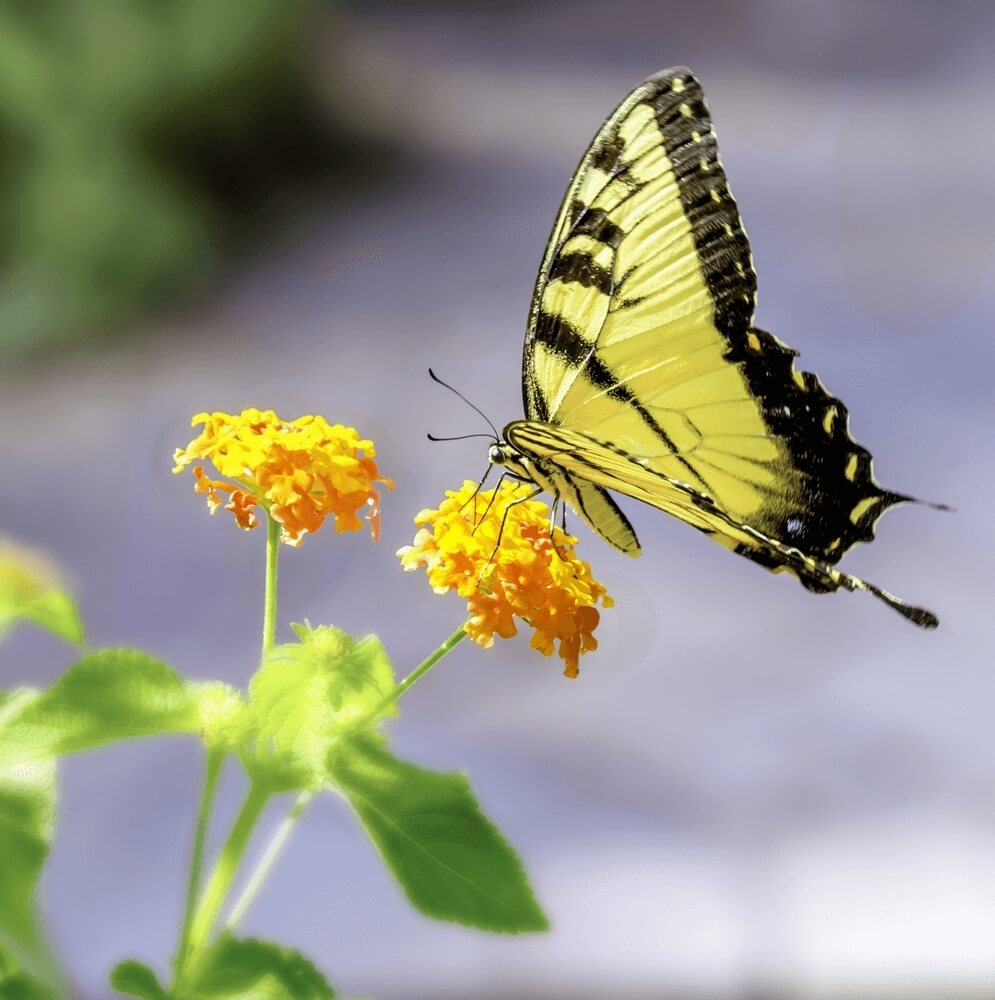 Good morning images of Butterfly on a flower