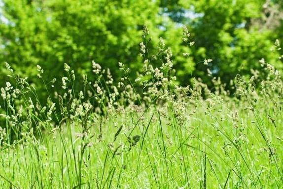 Good morning images of grass in field