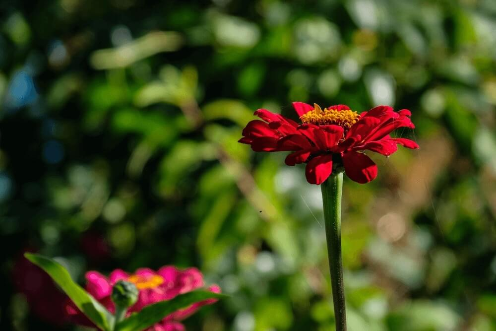 Good morning images of red flower isolated