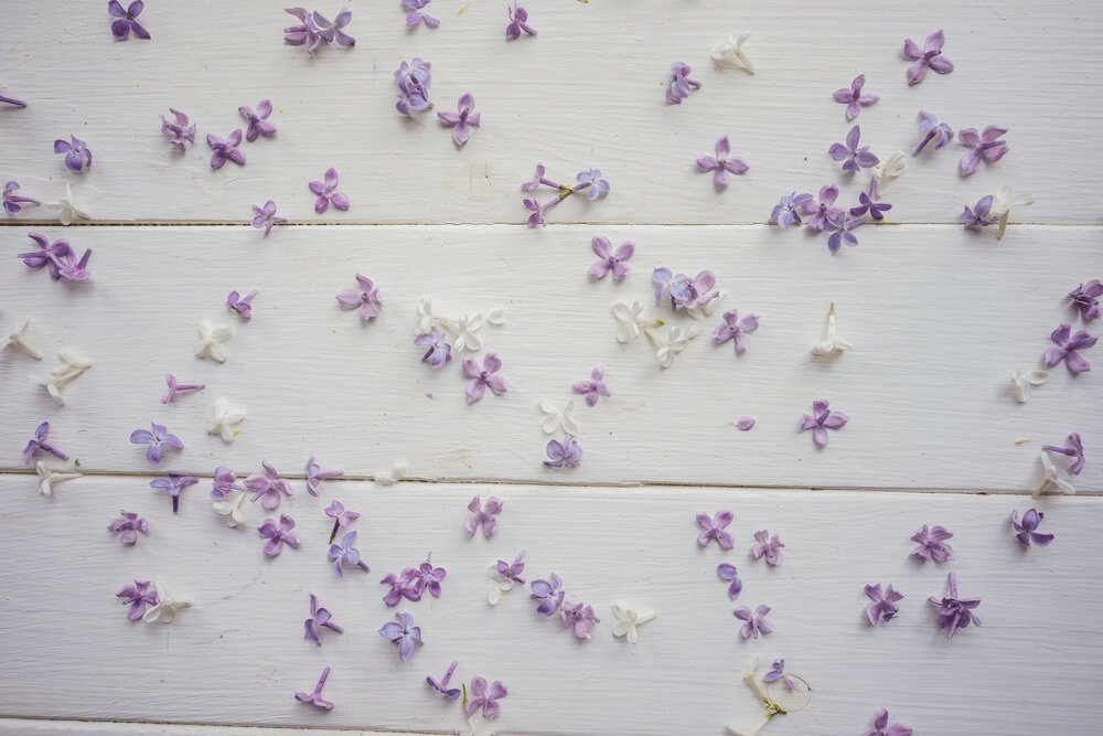 Good morning images with Small buds of lilac flowers