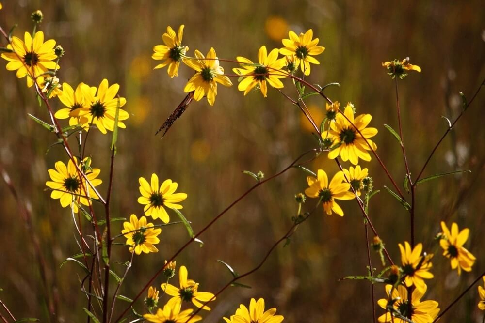 Good morning images with Yellow Field Flowers