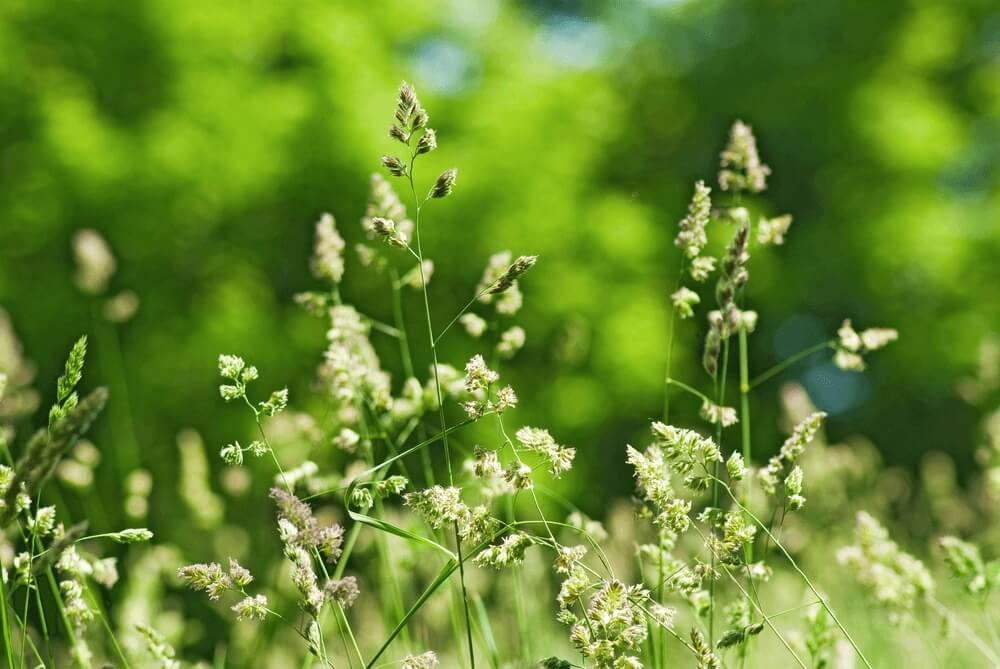 Good morning images with grass in field close-up Flowers