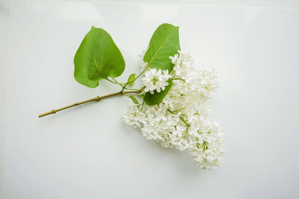 Good morning images with white Design flowers