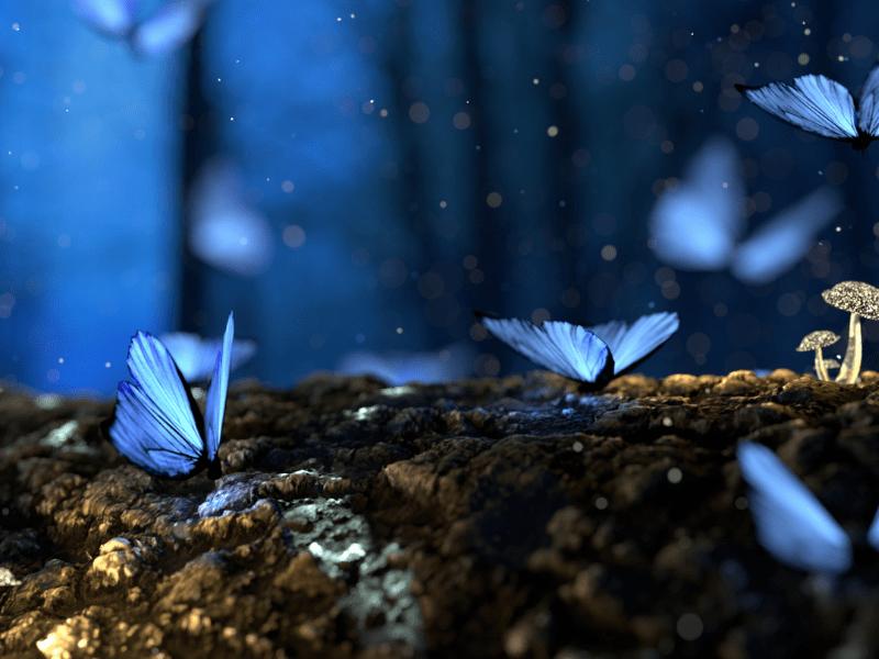 Sinisiä perhosia metsässä