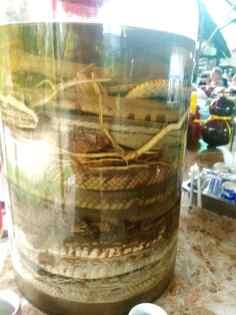 Bimber z węży - Wietnam