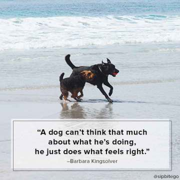 dog friendly beach in carmel beach quote