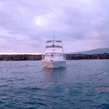 Night snorkeling with Manta Rays in Kona is the best snorkel on the Big Island. Add it to your Hawaii adventure list.
