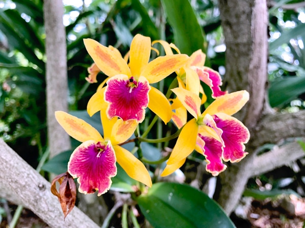 Hawaiian flowers in bright pink and yellow on the Greenwell Kona Coffee Tour