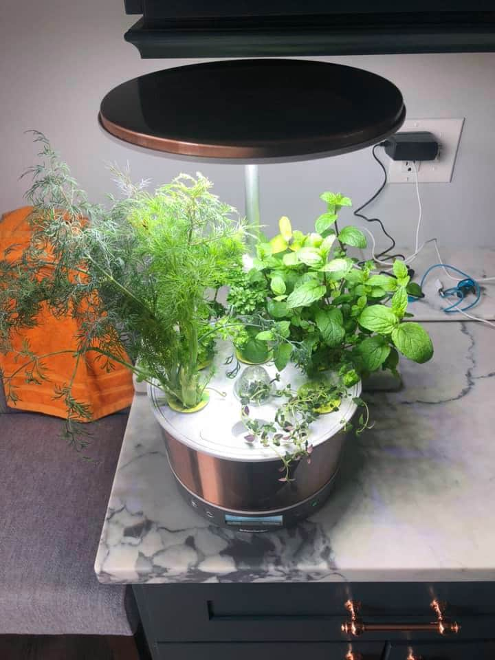 LED light for growing herbs indoors