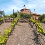 Viansa Winery & Marketplace Photo 2