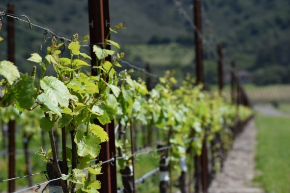 10 Trivia Questions About Sonoma County Wine