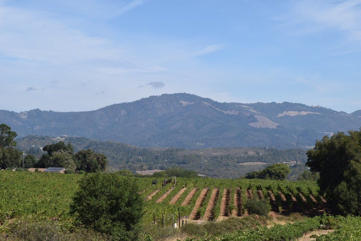 Frequently Asked Questions About Sonoma Wine