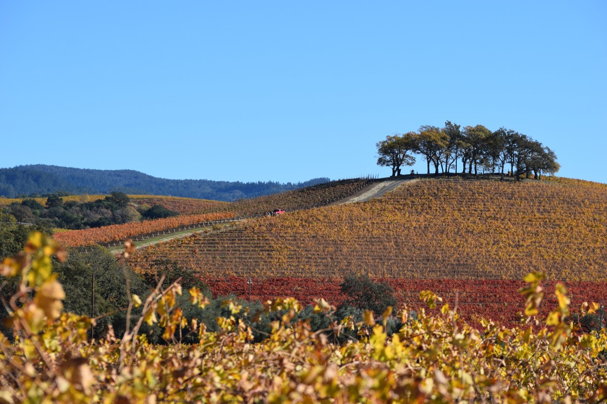 Sonoma County Is Open, Visit Wine Country Soon