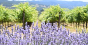 Enjoy the Outdoors at St Francis Winery: A Virtual Sonoma Winery Tour